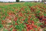 accordo pomodoro emilia romagna 2