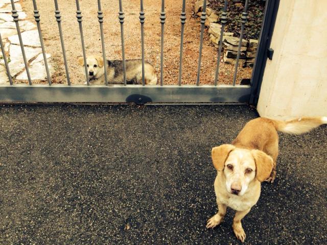 Questi cani sono stati trovati a San Pietro in Elda, se li riconoscete contattateci
