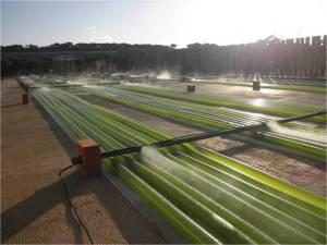 alghe biodiesel