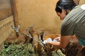 Centro volont bambi1