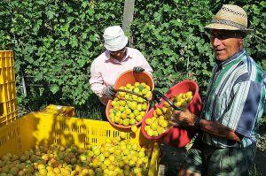 lavoro_agricoltura